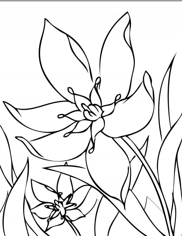 flori-de-primavara-de-colorat-narcisa-floare