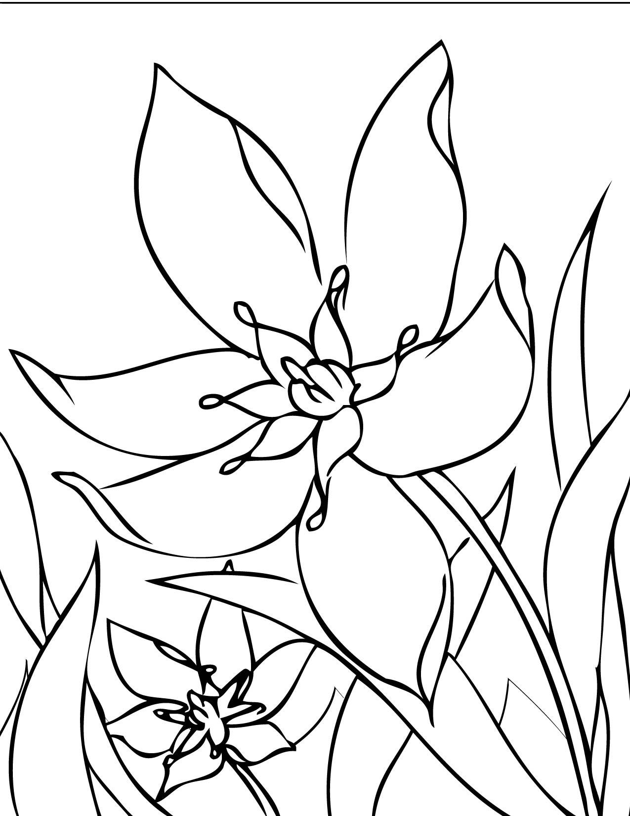 Flori De Primăvară De Colorat Dragoş şerban