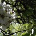 flori-par-dambovita