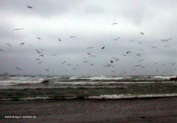 marea-in-februarie-dragos-serban