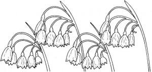 planse-de-colorat-clopotei-ghiocei-flori-primavara