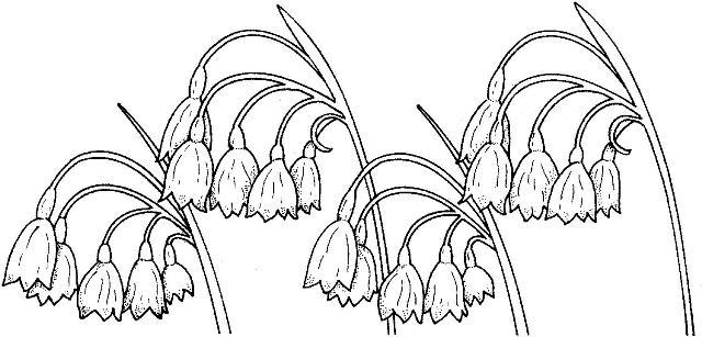 Planșe De Colorat Flori Primăvară Dragoş şerban